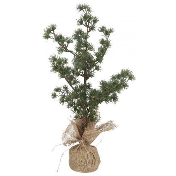 Cedertræ m/jutefod - h59 cm